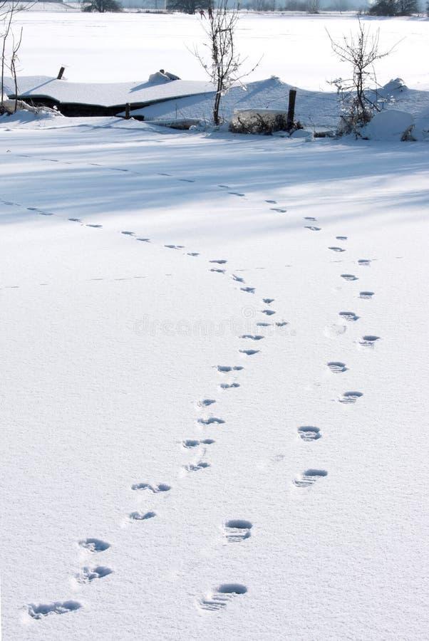Pegadas na neve em cima do gelo holandês imagens de stock royalty free