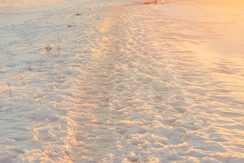 Pegadas na neve na hora dourada foto de stock