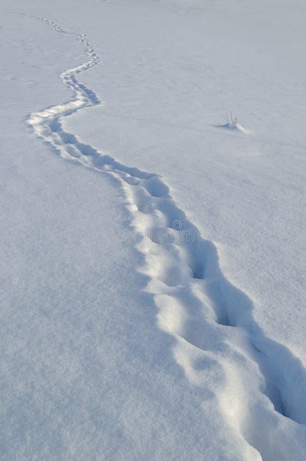 Pegadas na neve profunda foto de stock royalty free
