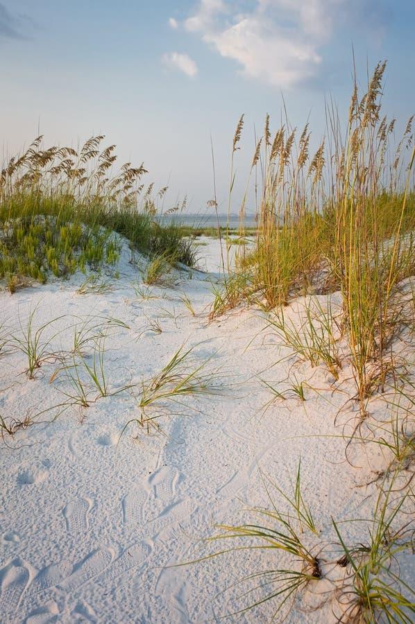 Pegadas nas dunas de areia na praia fotos de stock royalty free