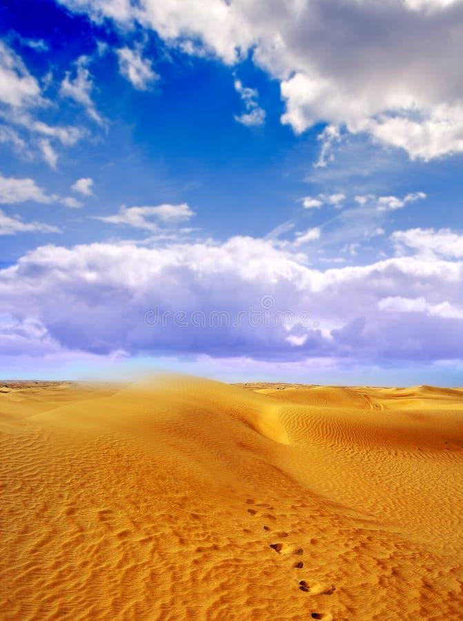 Pegadas no deserto   fotos de stock