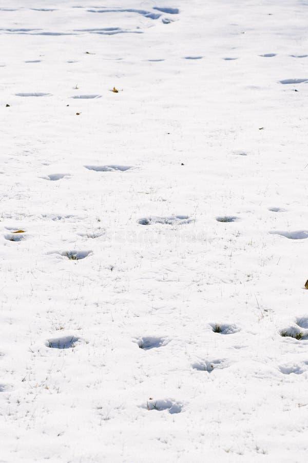 Download Pegadas no fundo da neve foto de stock. Imagem de neve - 107527188