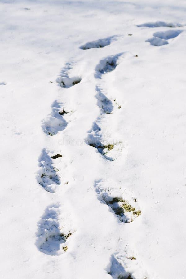 Download Pegadas no fundo da neve foto de stock. Imagem de estação - 107527376