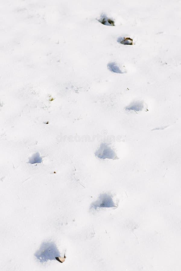Download Pegadas no fundo da neve imagem de stock. Imagem de paisagem - 107527445