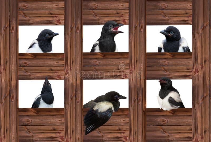 Pegas novas em expressões diferentes fotos de stock royalty free