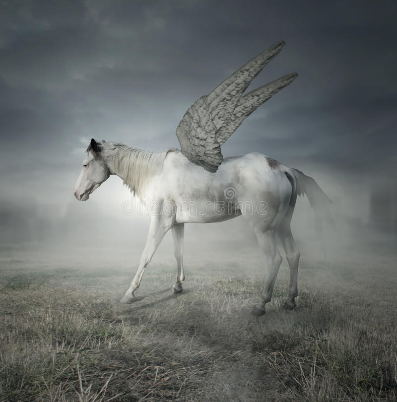 Pegasus royalty free stock photo