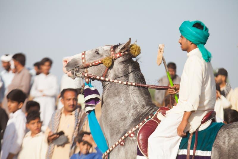 Pegger шатра на лошади стоковые фото