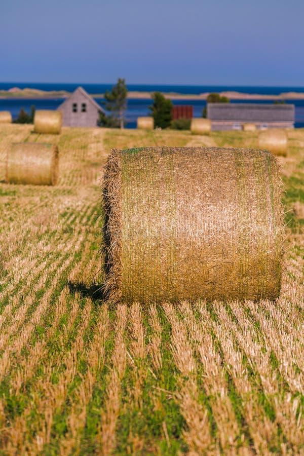 PEI Hay Bales rural photos stock