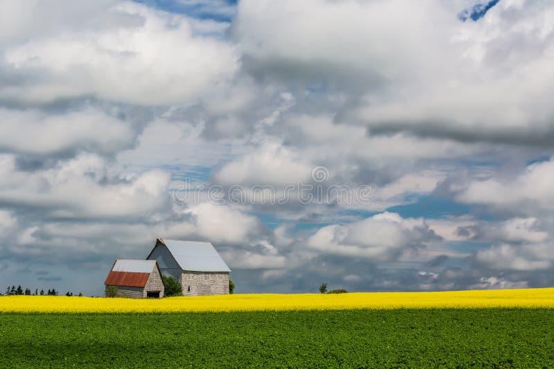 PEI Rural Farmland images libres de droits