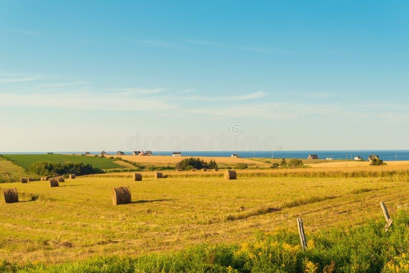PEI rural scene. (Central Coastal Drive, Prince Edward Island, Canada royalty free stock image