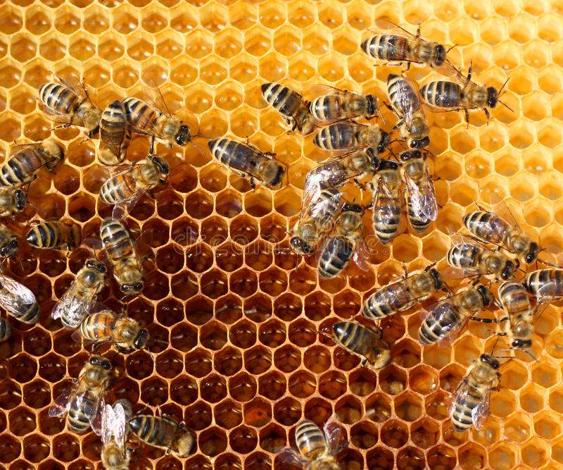 Peigne de miel et abeilles photo stock