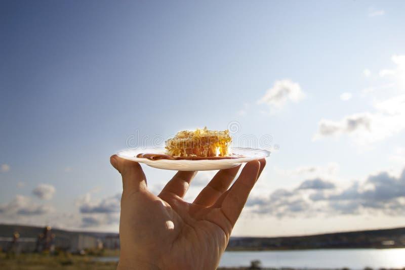Download Peigne De Miel Sur Une Soucoupe Blanche Photo stock - Image du nourriture, appétit: 45370672