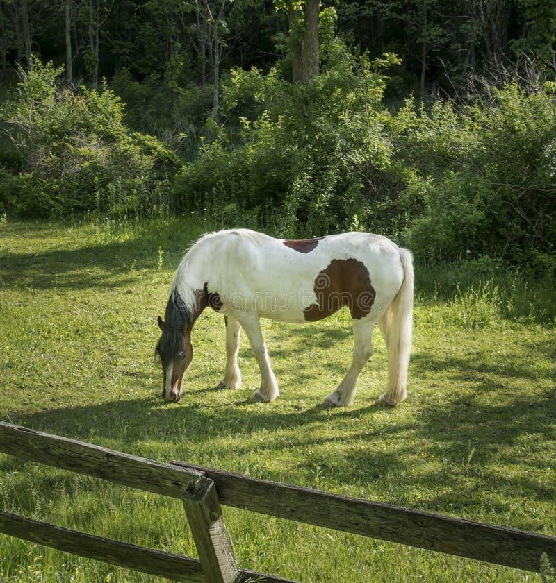 Peignez le cheval de trait dans Hudson Valley photo stock