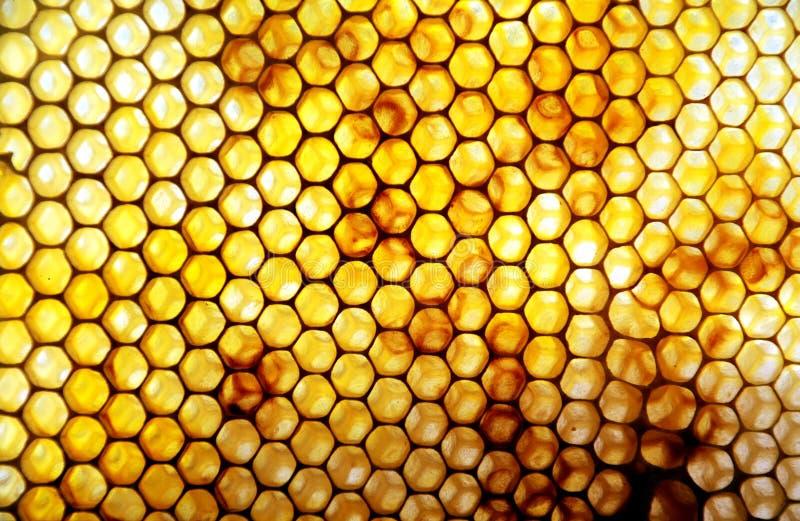 Peine de la miel con polen fotos de archivo libres de regalías