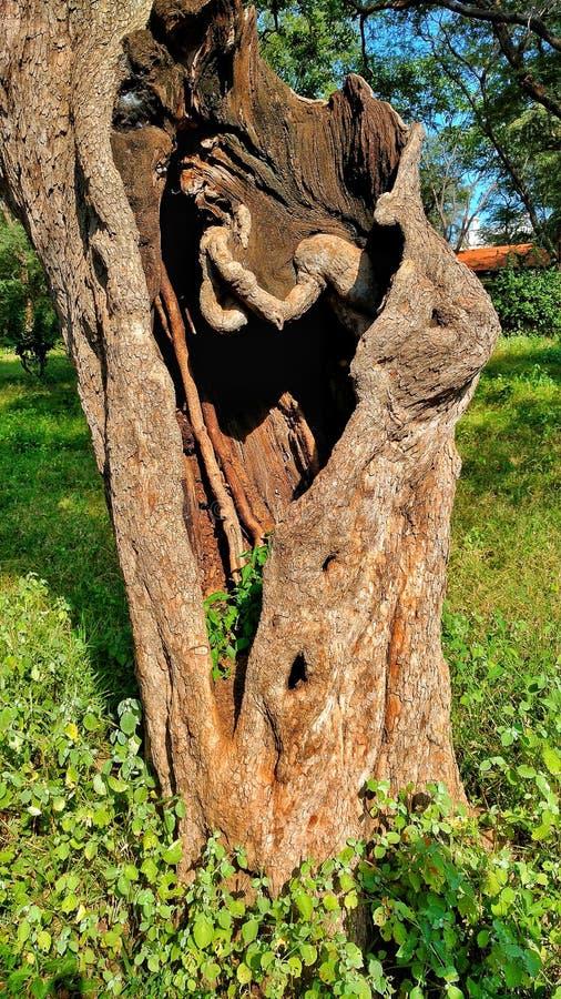Peine de mère nature dans un trou d'arbre photo libre de droits