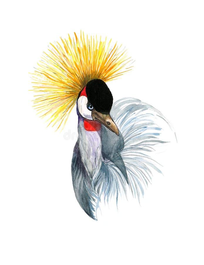 Peint à la main couronné de Crane Balearica Bird Watercolor Illustration d'isolement sur le fond blanc illustration stock