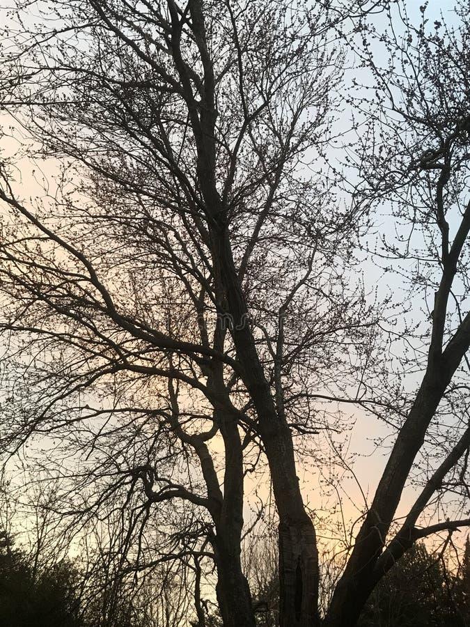 Peint égaliser le coucher du soleil vu par les arbres images libres de droits