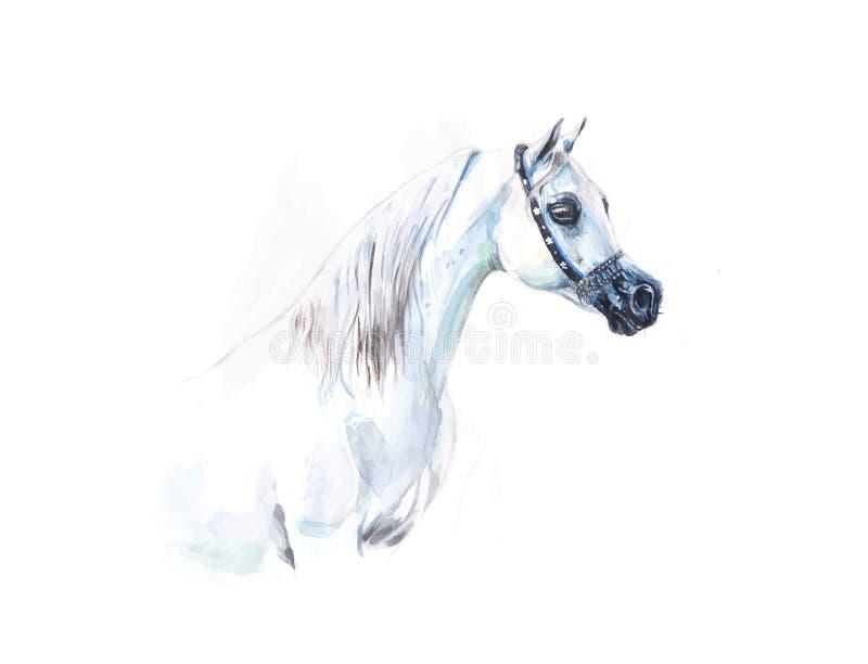 Peinture Arabe grise d'aquarelle de cheval dans le format de vecteur illustration libre de droits