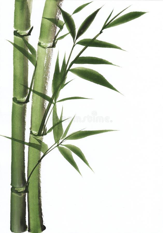 Peinture d'aquarelle de bambou illustration libre de droits