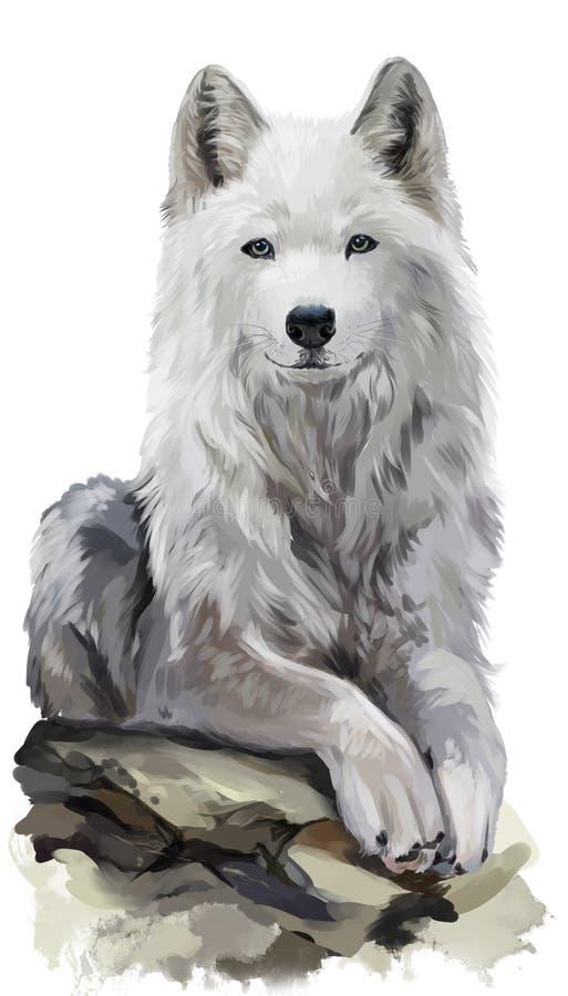 Peinture d'aquarelle de loup blanc illustration libre de droits