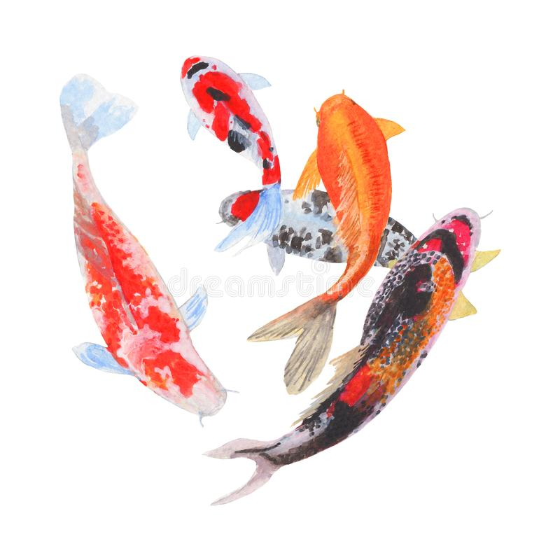 Peinture d'aquarelle de poissons de merde d'isolement Illustrations peintes à la main de poissons de merde d'aquarelle Poissons d photos stock