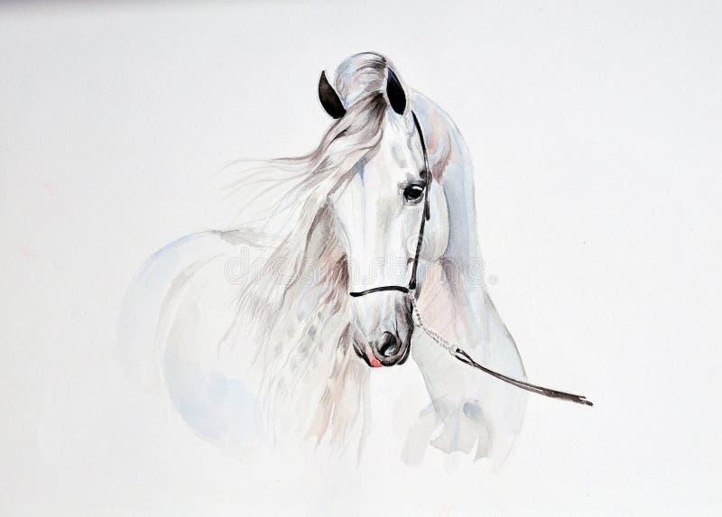 Peinture d'aquarelle de portrait andalou de cheval illustration libre de droits