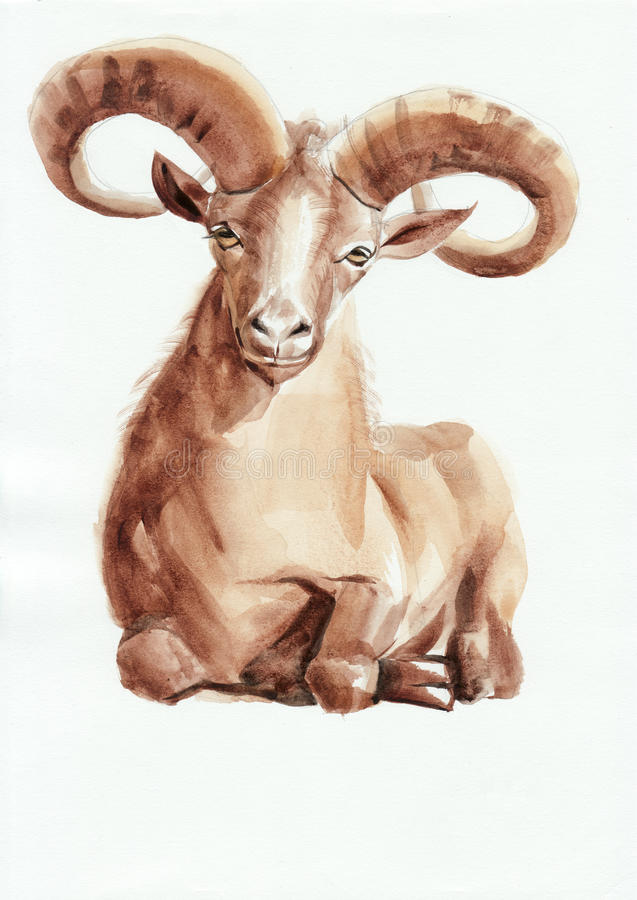 Peinture d'aquarelle de Ram illustration stock