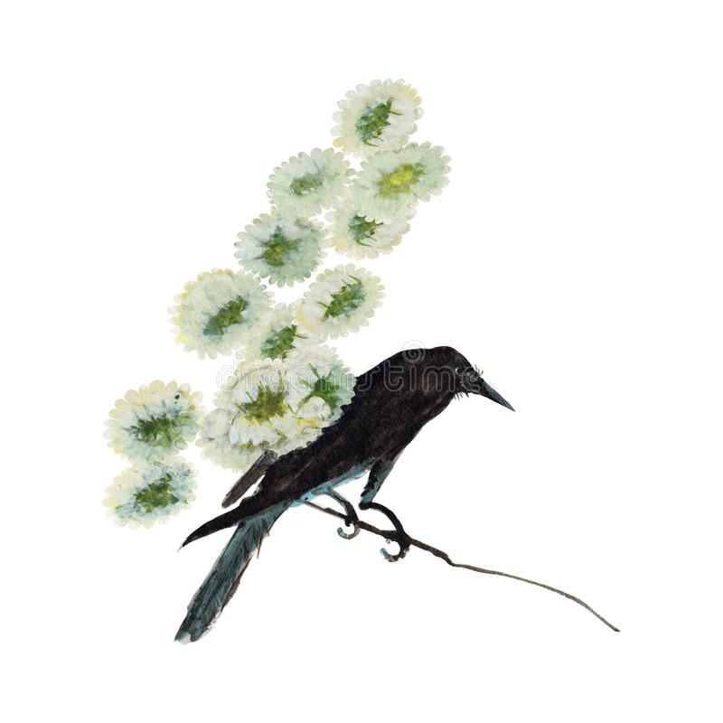 Peinture d'aquarelle d'illustration de fleur de corneille Aquarelle peinte à la main illustration d'un oiseau d'isolement photographie stock libre de droits
