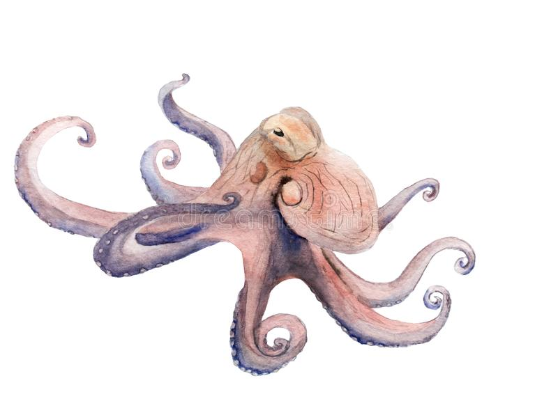 Peinture d'aquarelle sur le thème marin - poulpe image libre de droits