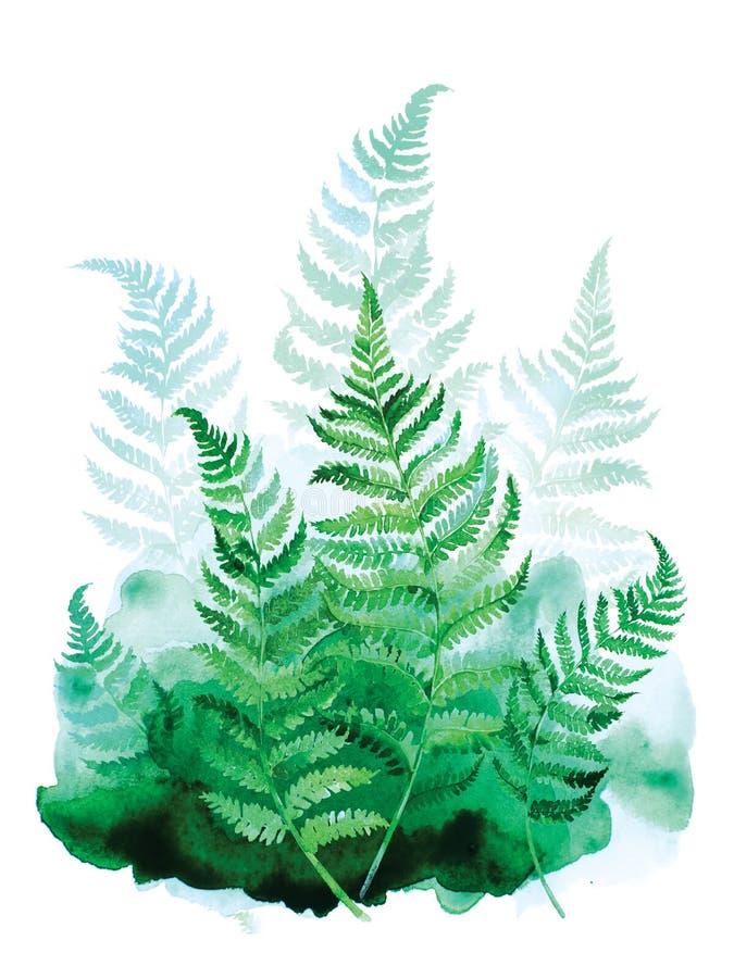 Peinture d'art d'aquarelle des feuilles vertes de fougère sur le fond blanc illustration stock