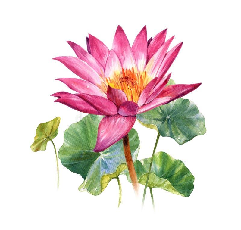 Peinture d'illustration d'aquarelle des feuilles et du lotus illustration libre de droits