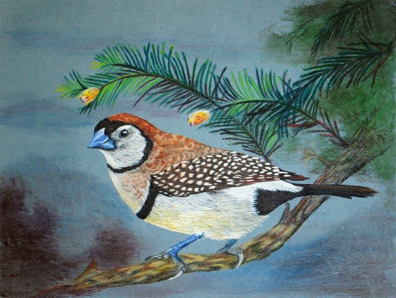 Peinture d 39 un oiseau de pinson de hibou illustration stock for Oiseau couleur