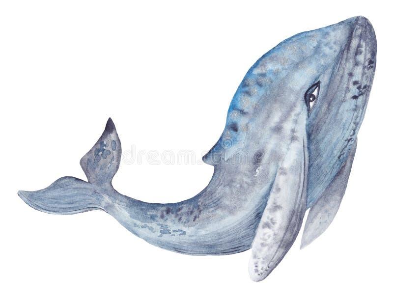 Peinture de baleine d'aquarelle illustration de vecteur