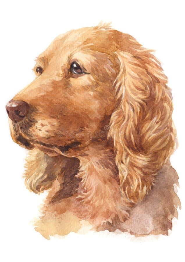 Peinture de couleur d'eau, couleur bronzage, race anglaise 060 de cocker illustration de vecteur