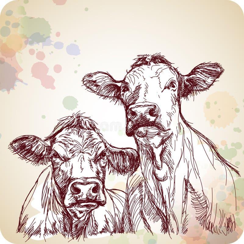 Peinture de croquis et de couleur d'attraction de main de deux vaches illustration libre de droits