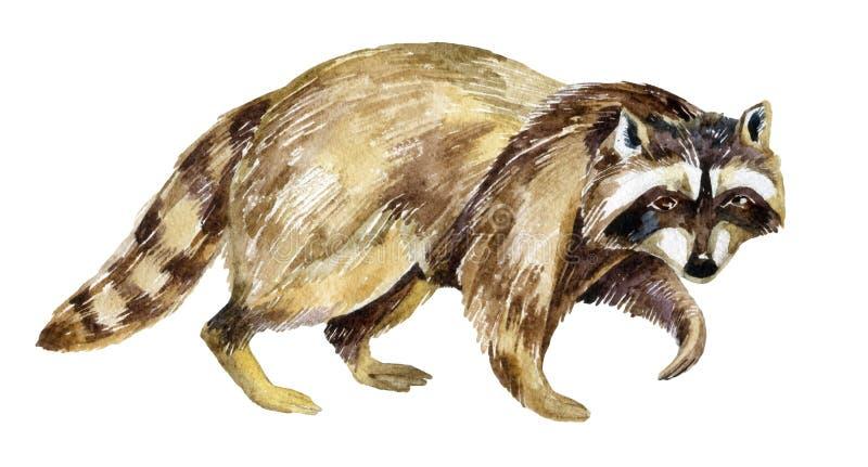 Peinture de raton laveur illustration stock