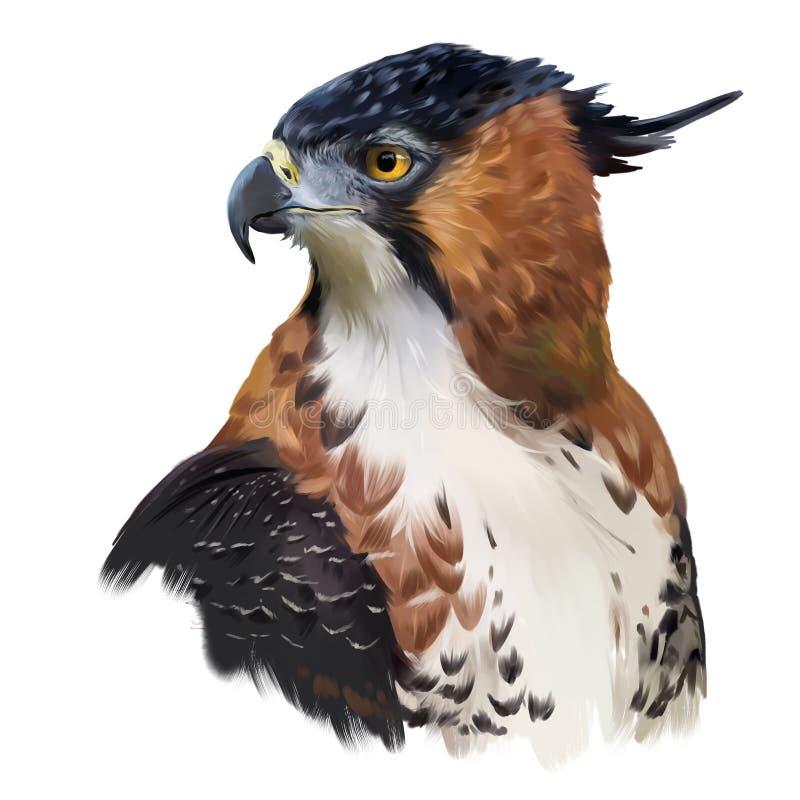 Peinture fleurie d'aquarelle de faucon-Eagle illustration de vecteur