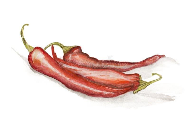 Peintures d'un rouge ardent de poivrons de /poivron d'isolement illustration de vecteur