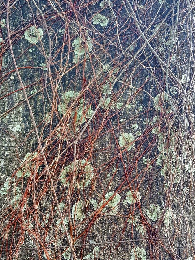 Peintures des années supprimant la nature photo stock