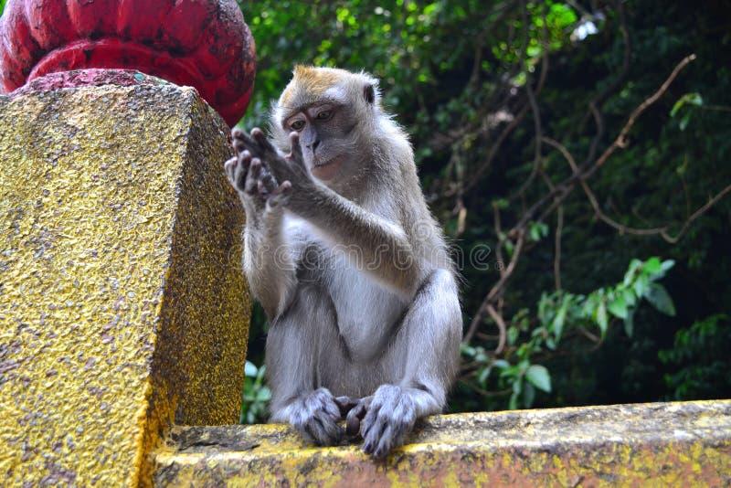 Peinzende aap royalty-vrije stock afbeelding