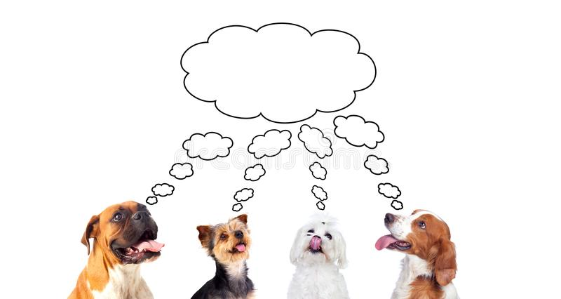 Peinzende die honden op witte achtergrond worden geïsoleerd royalty-vrije stock afbeelding