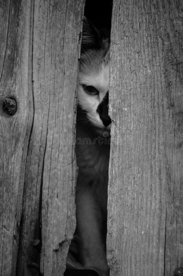 Peinzende kat (zwart-witte foto) royalty-vrije stock foto's