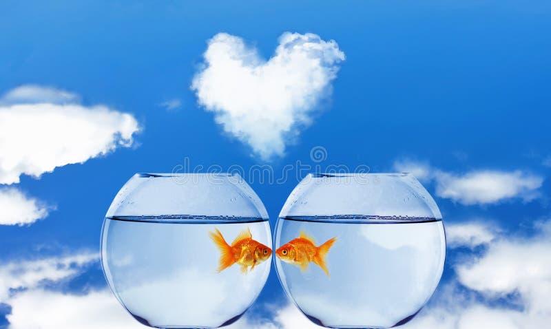 Peixe dourado e aquário foto de stock royalty free