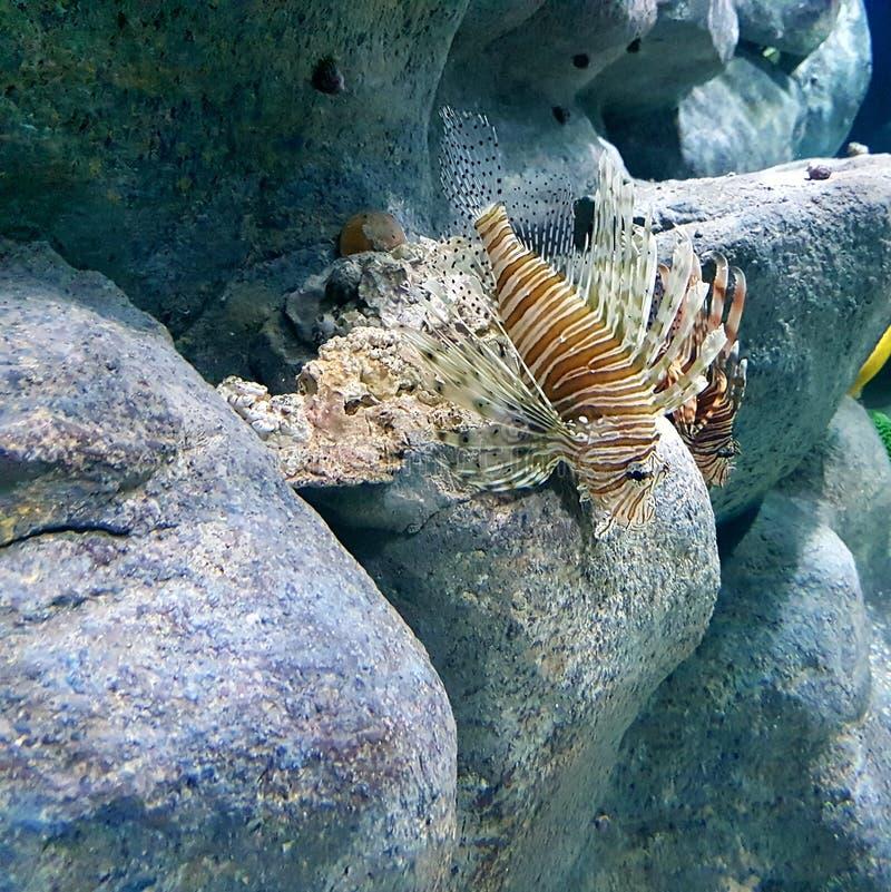 Peixe mars images stock