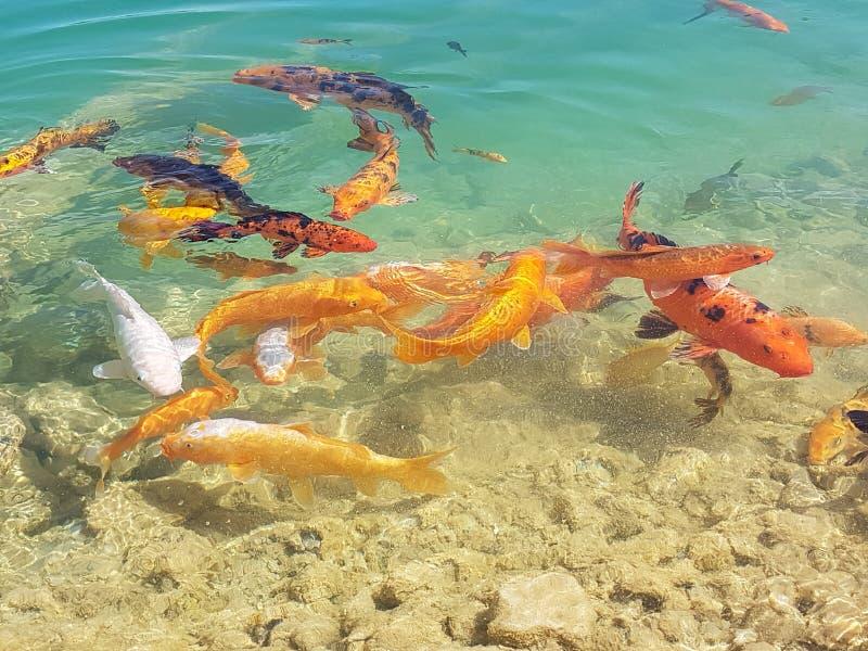 peixes imagens de stock royalty free