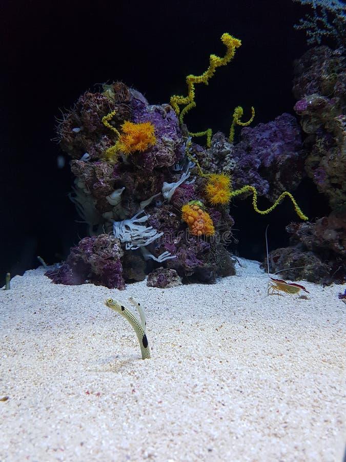 peixes fotos de stock royalty free