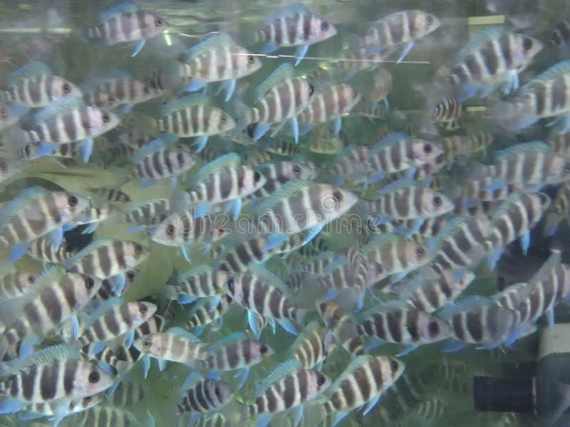 Peixes fotografia de stock