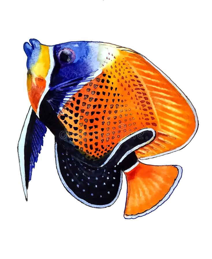Peixes alaranjados brilhantes com um ponto preto e uma luz - esboço azul ilustração do vetor