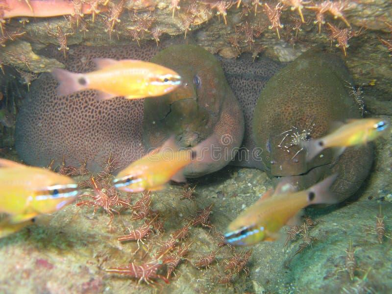 Peixes amarelos sob a água foto de stock