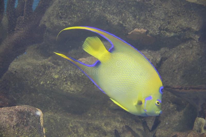 Peixes aqui duvidosos imagens de stock
